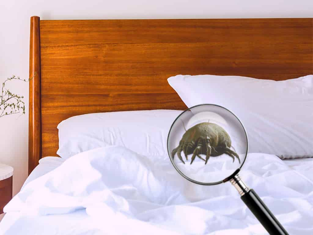 How To Prevent Dust Mites in Bed Sheets