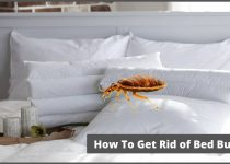 How to remove bed bugs from bedding