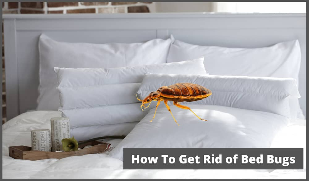 How To Get Rid of Bed Bugs in Bed Sheets
